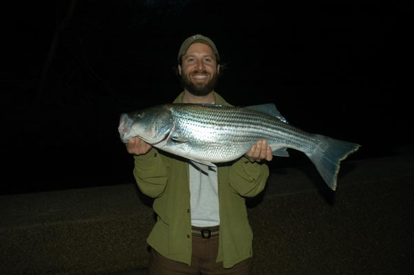 stripedbass.ClearCreek